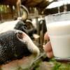Дальнейшее снижение закупочных цен на молоко во Владимирской области не прогнозируется
