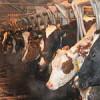 Суздальской межрайонной прокуратурой выявлены нарушения при использовании средств государственной поддержки сельхозтоваропроизводителей