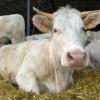 5 июля во Владимире пройдет областная выставка племенного скота и птицы «Владимирские зори — 2013»