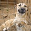 Приюты для животных во Владимире на грани закрытия!