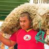 Сабантуй: национальные песни, вкусный плов и главный приз — барашек