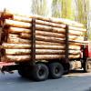 Изменились правила транспортировки древесины